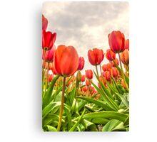 Dutch Tulips Canvas Print