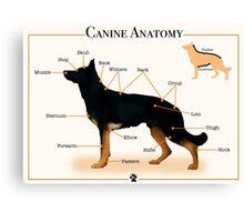 Canine Anatomy Canvas Print