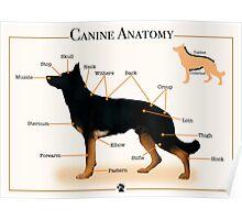Canine Anatomy Poster
