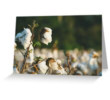 Cotton Field 10 Greeting Card