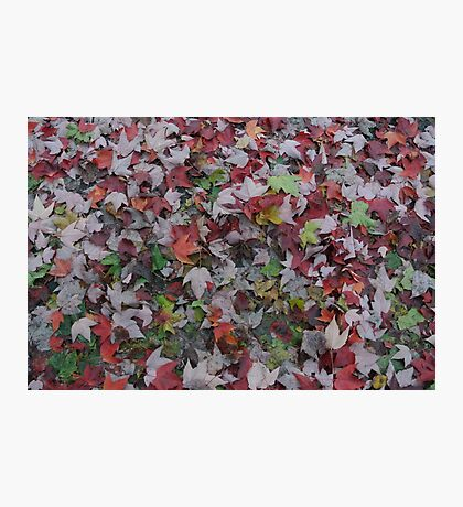 Walk through Colorful leaves Photographic Print