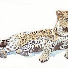 Leopard {Panthera pardus} by Maree Clarkson