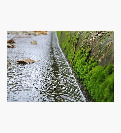 Storm Drain with Moss Forest Photographic Print