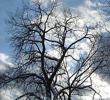 Tree Time by Gail Jones