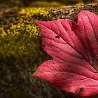 Red Autumn Leaf by Ian McGregor