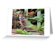 Bashful fox kit Greeting Card
