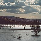 Lake Hume Afternoon by Werner Padarin