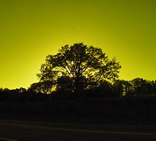 Oak Tree Golden Silouette by Nick Kirby
