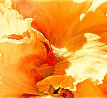 A Floral Flow  Abstract by Barbara  Brown