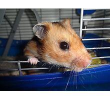 Blu Fondue, the beatnik hamster Photographic Print