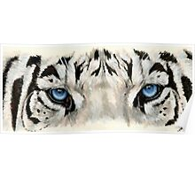 Eye-Catching Royal White Tiger Poster