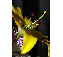 Edmonton Lily Photographic Print