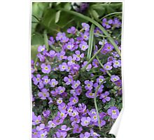 Small Purple Flowers  Poster