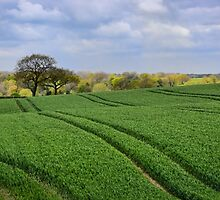 Spring Greens by Sue Martin