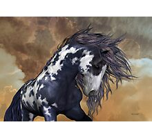 Storm .. Wild Stallion Photographic Print