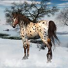 Winter Appaloosa by LoneAngel