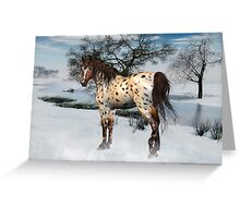 Winter Appaloosa Greeting Card