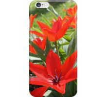 Tulips Garden iPhone Case/Skin