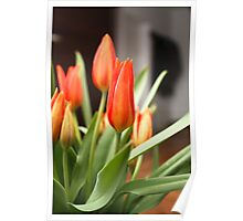 Beauty Tulips in a Vase 2 Poster
