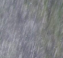 Afternoon Delight - Wet Tropics Downpour (Rain Detail)  by Kerryn Madsen-Pietsch
