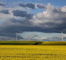 Wind Power by Vickie Emms