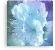 Colorful  Whispers of White Azaleas Canvas Print