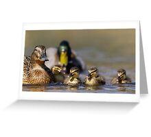 Mallard family (Anas platyrhynchos) Greeting Card