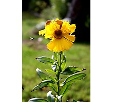 Flower n Fly Photographic Print