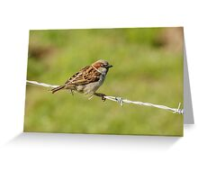 Male House Sparrow (Passer domesticus) Greeting Card