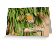 European Robin (Erithacus rubecula) on garden spade Greeting Card
