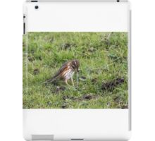 Redwing (Turdus iliacus) with earthworm iPad Case/Skin