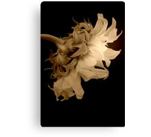 Sleeping Sunflower Canvas Print
