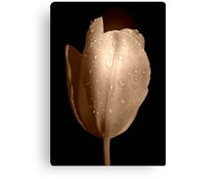 Tulip in Sepia Canvas Print