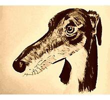 Quirky saluki/ lurcher/ greyhound Photographic Print