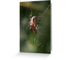 Successful Spider Greeting Card