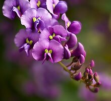 Purple cascade by Celeste Mookherjee