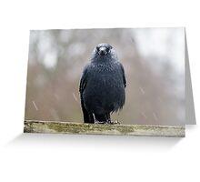 Jackdaw (Corvus monedula) in the rain Greeting Card