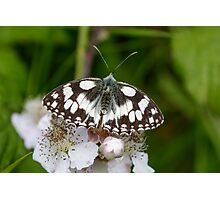 Top view of a Marbled White butterfly (Melanargia galathea) on pink flower Photographic Print