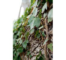 Elf Leaf Photographic Print