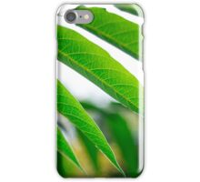 Ailanthus branch with narrow leaves iPhone Case/Skin