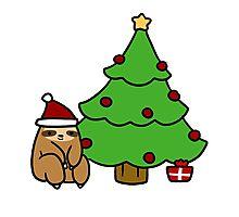Christmas Tree Sloth Photographic Print
