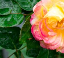 Autumn withered rose with raindrops Sticker