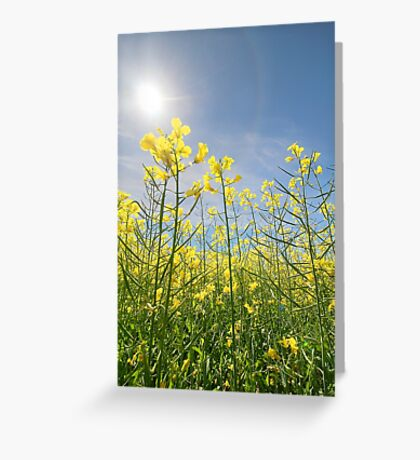 Sun Halo Over The Canola Greeting Card