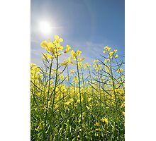 Sun Halo Over The Canola Photographic Print