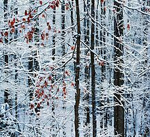 WINTER FOREST by Chuck Wickham