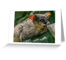 Possum Magic Greeting Card