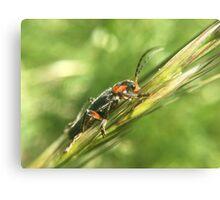 Tribu d'insectes profitant du soleil - Photo n°2 Canvas Print
