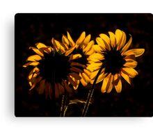 Light and Sunflower Canvas Print