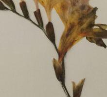 Dried Freesia Flower Sticker