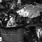 Birdbath 2 (Black & White) by Mark Fendrick